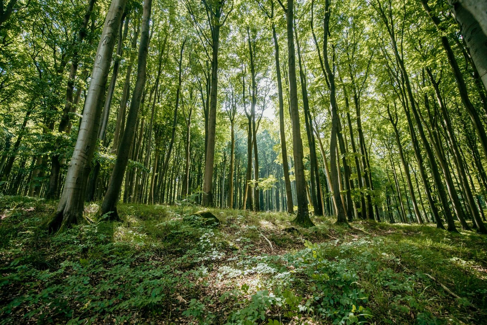 Eine Aufnahme von einem grünen Laubwald.
